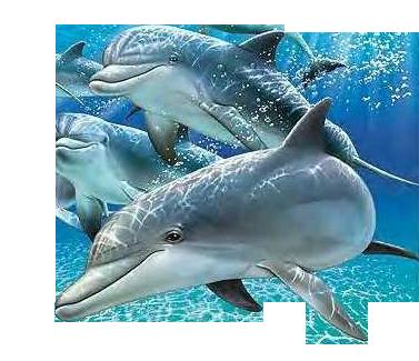картинка в дельфины море